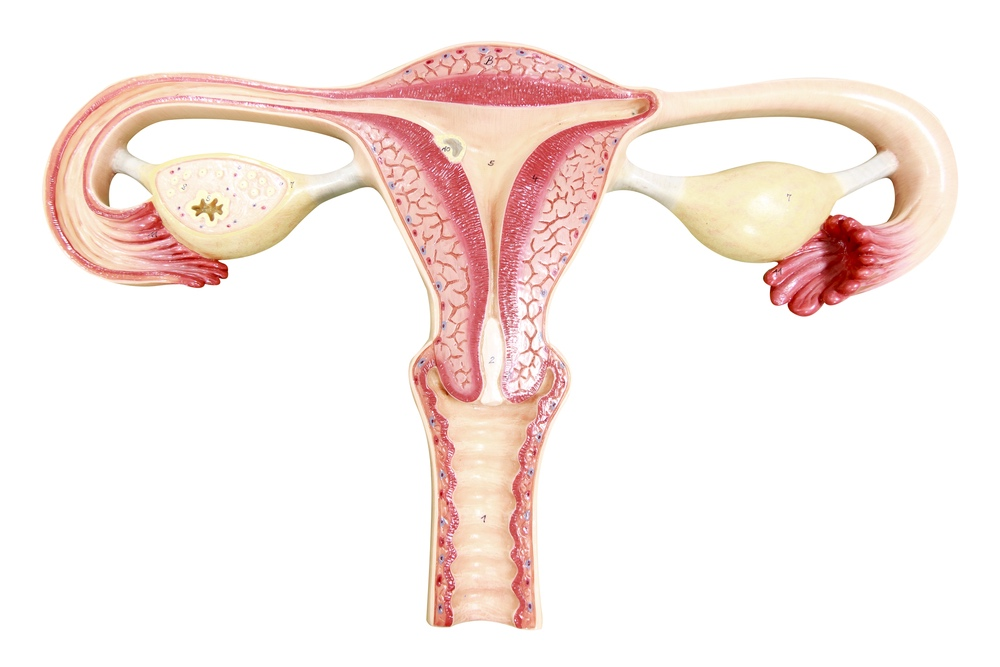 bolestivá ovulace_4