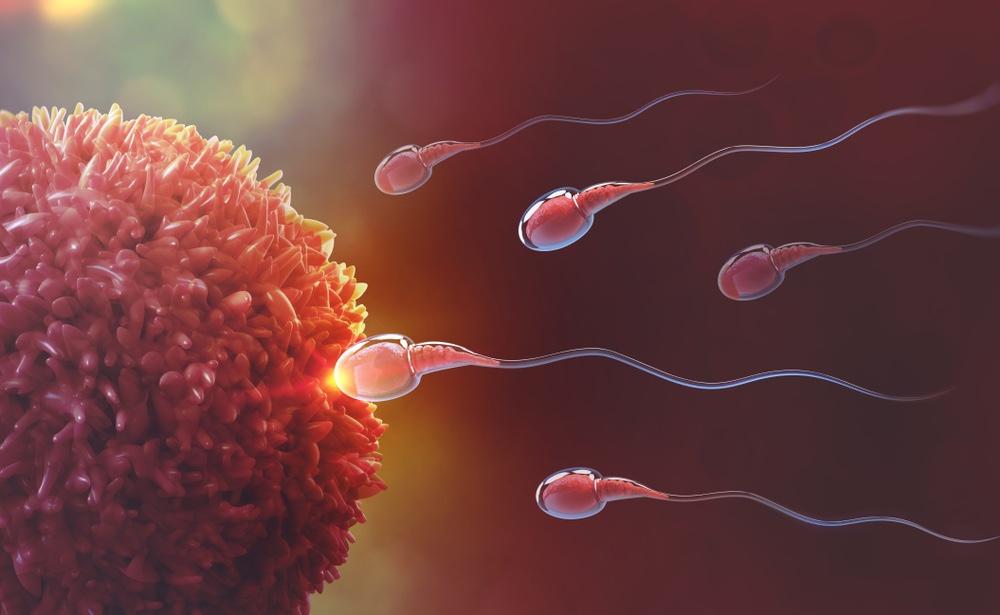 otěhotnění mimo ovulaci_1