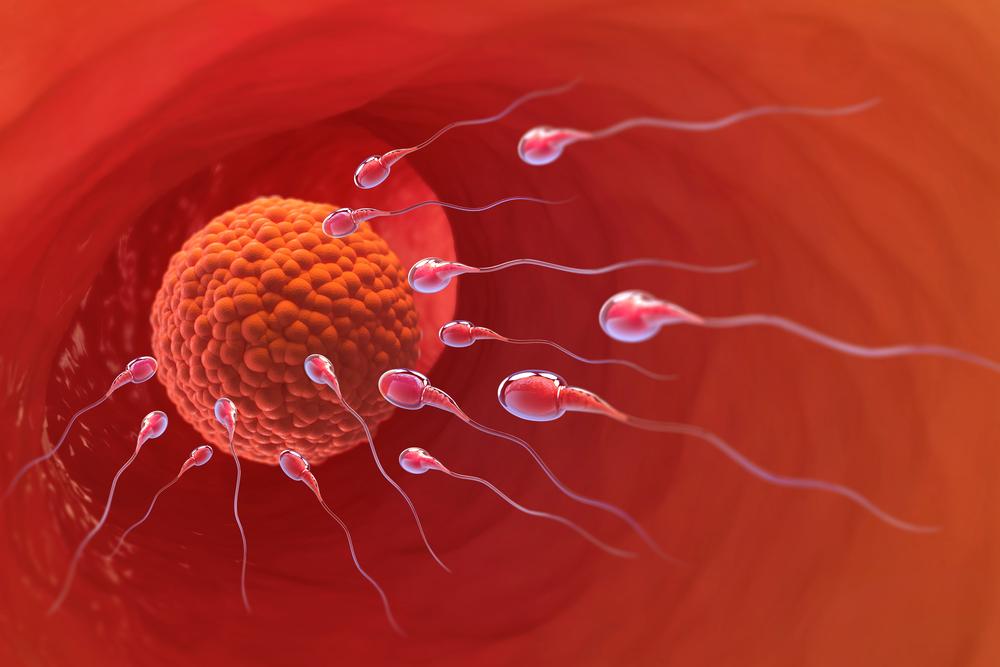 Podpora ovulace