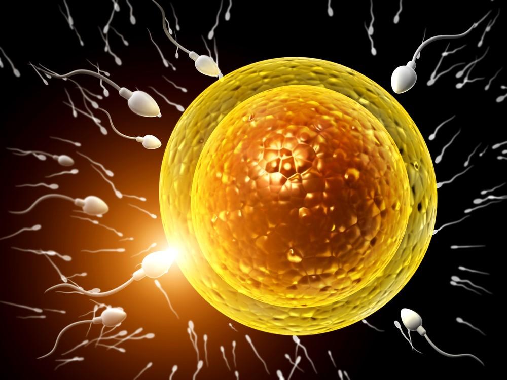 Po vysazení antikoncepce se často dostaví bouřlivá ovulace. Šance otěhotnět jsou v tu chvíli vysoké